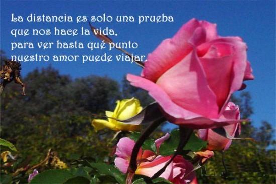 Imagenes-con-frases-de-flores-con-frases-de-amor-a-distancia