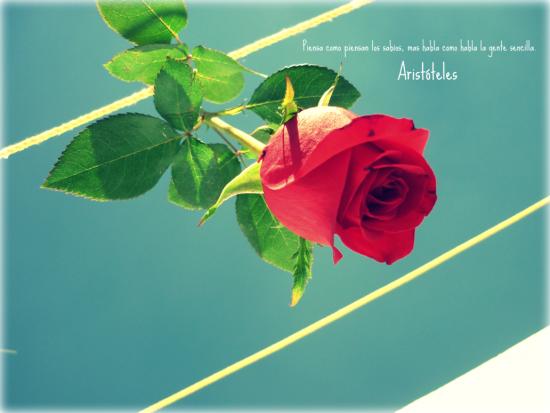 flores_y_frases_by_guzinanda-d36l9xx